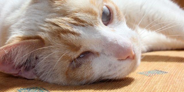 Katzenhilfe Olli e. V.