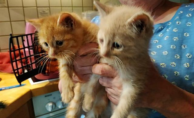 2 mutterlose Kitten