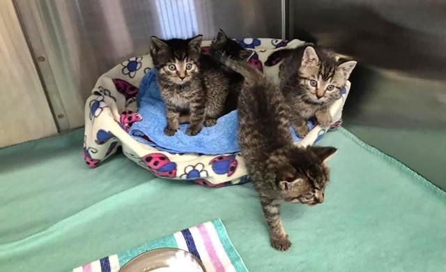 4 mutterlose Kitten
